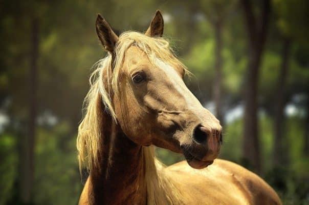 Evaluer état santé cheval